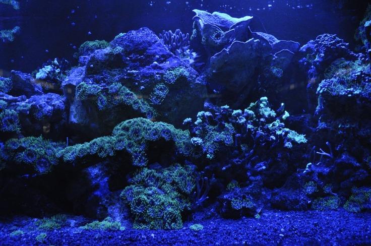 coral-reef-692957_960_720