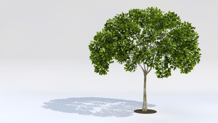 582518-young-green-tree